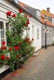 rosebushgata Royaltyfria Bilder