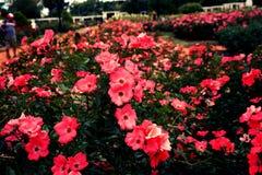 Rosedal de Палермо Стоковое фото RF
