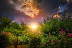 Rosegarden soluppgång Arkivfoton