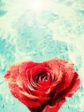 Roseheart stock foto
