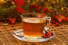 Rosehip φθινοπώρου τσάι Στοκ εικόνα με δικαίωμα ελεύθερης χρήσης