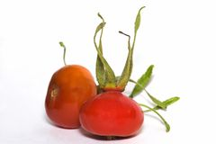 Rosehip Stock Photography