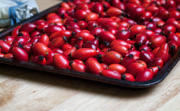 Rosehip Berries on a Baking Tray Royalty Free Stock Photography