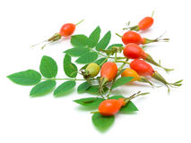 Rosehip berries and leaves on a white background Stock Photos