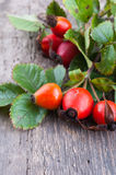 Rosehip berries Stock Photography