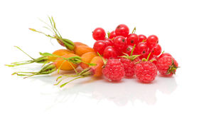 Rosehip berries, raspberries and red currants Stock Images