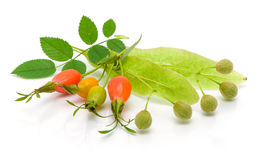 Rosehip berries and seeds of linden on white background Stock Photography