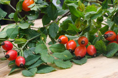 Rosehip berries. Twig with rosehip berries on table Stock Images