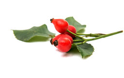 Rosehip berries. On a white background Royalty Free Stock Images