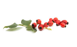 Rosehip berries. On a white background Stock Photography