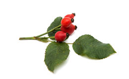 Rosehip berries. On a white background Royalty Free Stock Image