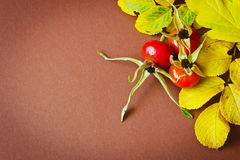 Rosehip fruit Stock Photo