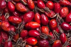 Rosehip fruit Stock Photography