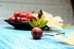 Rosehip fruits Royalty Free Stock Photo