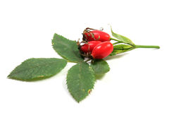 Rosehip with leaves Royalty Free Stock Photo