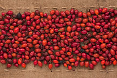 Rosehip lying on sackcloth between the lines Stock Photos