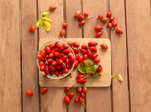 Rosehip. A real explosion of color and odor Royalty Free Stock Photos
