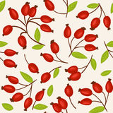 Rosehip seamless background Royalty Free Stock Photography