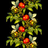 Rosehip seamless pattern border on black background. Hand drawn watercolor illustration, design for fabric, textile, wrapping paper, card, invitation Royalty Free Stock Photography