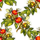 Rosehip seamless pattern on white background Royalty Free Stock Images