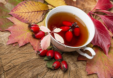 Rosehip tea Stock Photography