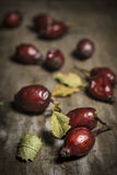 Rosehip vert. On dark wood royalty free stock photos
