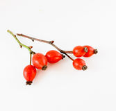 Rosehips Royalty Free Stock Photo