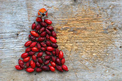 Rosehips Christmas Tree Stock Image