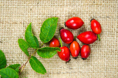 Rosehips with green leaves Royalty Free Stock Photo