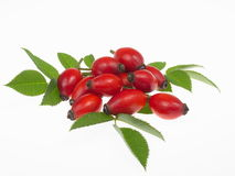 Rosehips Stock Images