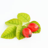 Rosehips isolated on white Royalty Free Stock Photo