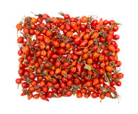 Rosehips isolated Royalty Free Stock Photos