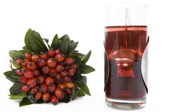 Rosehips Tea Stock Photo