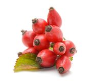 Rosehips Royalty Free Stock Photography