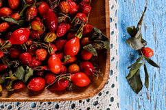 Rosehips Stock Image