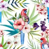 Rosella bird pattern Stock Image