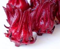 Rosella Fruit fresca Imagem de Stock Royalty Free