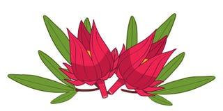 roselle illustrazione vettoriale