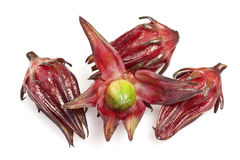 Roselle Stock Images