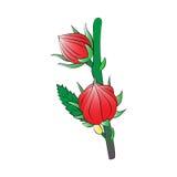 roselle Lizenzfreies Stockbild