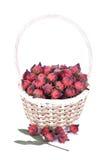 Roselle blommar, röda Roselle blommor i korgen på vit backg Arkivfoton