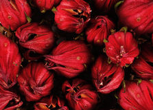 Roselle close up for background Royalty Free Stock Images