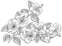 Roselle flower branch graphic black white isolated sketch illustration Stock Photo