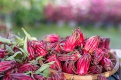 Roselle flower fruit. In bamboo basket royalty free stock photos