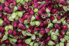 Roselle flowers Hibiscus sabdariffa, background royalty free stock photos