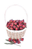 Roselle flowers,red Roselle flowers in the basket on white backg. Round Stock Photos