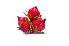 Roselle-Früchte Stockbild