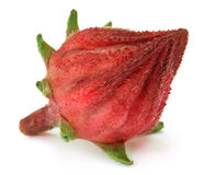 Roselle fruit Stock Image