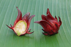 Roselle fruits Royalty Free Stock Photos