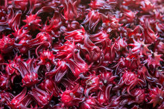 Roselle Royalty Free Stock Images